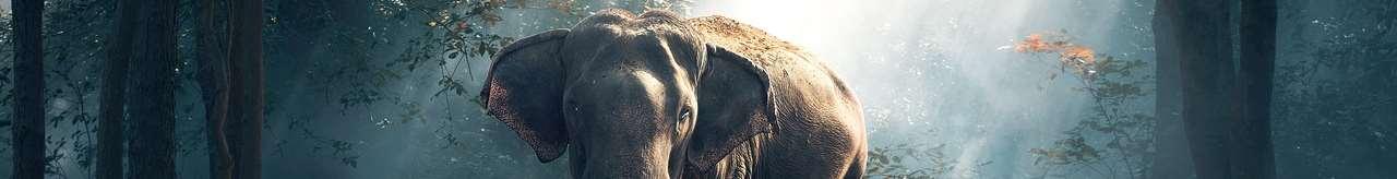 Elefant i en dimmig regnskog